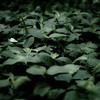 Across Forest Floors 013 (noahbw) Tags: d5000 dof nikon potawatomiwoods abstract blur depthoffield forest landscape leaves light natural noahbw quiet shadow square still stillness woods