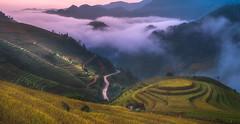 Mù Cang Chải, Yên Bái (banky405) Tags: mùcangchải yênbái mucangchai yênbáiprovince ประเทศเวียดนาม landscape vietnam นา