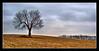 Unitary (J Michael Hamon) Tags: tree landscape lone single field farm jacksoncounty indiana winter corn rural photoborder hamon nikon d3200 nikkor outdoor nature scene scenery vista 40mm