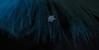 dec28 2017 16 (Delena Jane) Tags: delenajane dfo snowflake feather macro newfoundland ngc canada closeup pentaxart