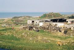 主人回家了 (YL.H) Tags: kodak film colorplus analog taiwan seaside 林口 canon 底片 cattle sea shore