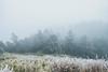 _MG_3750 (waychen_c) Tags: nantou renai renaitownship hehuanshan hehuanmountain wuling snow 南投 仁愛 仁愛鄉 合歡山 武嶺 tarokonationalpark 台14甲 fog mist