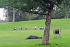 Hippie Hill (AntyDiluvian) Tags: california sanfrancisco park goldengatepark hill hippiehill bucolic homeless