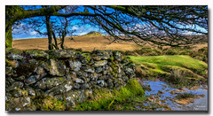 Batworthy Corner (jeremy willcocks) Tags: batworthycorner dartmoor devon uk landscape colour moor wall water kestor grass tree fujixpro2 wwwsouthwestscenesmeuk xf1024mm