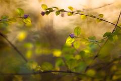 Forgotten realms (Ans van de Sluis) Tags: ansvandesluis maaswaalkanaal bokeh bokehlicious botanic botanical flora floral flower leaf leaves macro nature sunny realms forgotten forgottenrealms