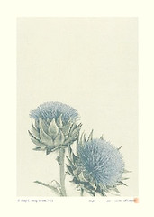 Thistle? (Japanese Flower and Bird Art) Tags: flower thistle cirsium asteraceae tetsuya noda modern woodblock screenprint print japan japanese art readercollection