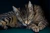 IMG_5840 (Lightcatcher66) Tags: katzencats florafauna makros lightcatcher66