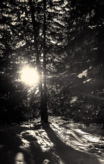Il neige, à la Terre Pure - 03