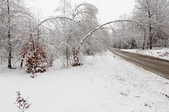 sneeuw weegt ... (doevos) Tags: bos gelderland nederland sneeuw veluwe winter forest neige snow woud