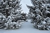Winter has arrived (ladybugdiscovery) Tags: snow cold tree garden spruce pine cone scene