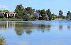 Jacarandas at Harrington Park Lake (Ggreybeard) Tags: harringtonpark nsw lake jacaranda