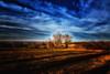 Champs (Terre d'Aveyron) Tags: champs ciel aveyron france arbre nuage terre