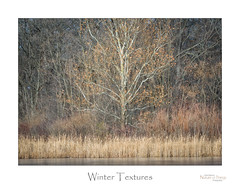 Winter Textures (baldwinm16) Tags: december forestpreserve il illinois midwest nature outdoors outside winter