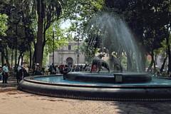 Pleasant fountain (Chemose) Tags: mexico mexique coyoacán fontaine fountain eau water statue sculpture arbre tree jardin public park centenario canon eos 7d mars march