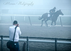 Walter taking a photo of a McGaughey horse (EASY GOER) Tags: belmontpark equine thoroughbreds sports horses horseracing