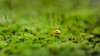walk on the moss side (Samuel Pettina) Tags: coccinelle mousse moss sporophyte macro proxi
