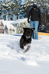 (wightmanp) Tags: goosecreek sc snow dog