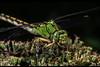 dr101029_40ab (dmitryzhkov) Tags: art architecture cityscape city europe russia moscow documentary photojournalism street urban candid life streetphotography streetphoto portrait face stranger man light shadow dmitryryzhkov people sony walk streetphotographer dragonfly bio biology insect hunter nature macro macrophoto