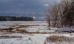Scarborough Marsh, Maine (jtr27) Tags: dscf4925xl jtr27 fuji fujifilm xt20 xtrans vivitar komine 55mm f28 macro manualfocus maine landscape marsh scarborough ice
