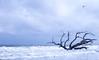 Driftwood Beach - Jekyll Island (thuygiaho) Tags: driftwood beach jekyll island bird cloudy