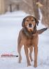 Hank (Rainfire Photography) Tags: rescue dog mix mutt pup rainfirephotography adoptme adoption pet portrait speakingofdogs