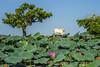 Corroboree Billabong, Nt, Australia (Shane Bartie) Tags: adelaide mary river floodplains corroborree billabong crocodile explore northern territory shane bartie corroboree