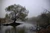 High water (Mike McCall) Tags: copyright2017mikemccall photography photo art image georgia usa vernacular culture southern america thesouth unitedstates northamerica south nature landscape river altamaha landing tree water riverscape fog morning longcounty long johnstonstationlanding
