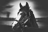 ide (shane holsclaw) Tags: horseportrait horse kentucky lexington stallion