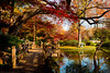 The Fort Worth Japanese Garden (Jeff_B.) Tags: dallas cowboys texas travel 2017 fortworth tx garden japanese japanesegarden hedge fall colors autumn foilage