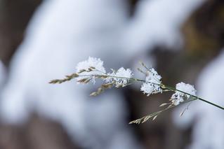 Winter stroll around Zavelstein