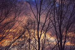 Sunrise Trees (ShinyPhotoScotland) Tags: unitedkingdom gbr scotland abstractqualities art birch caledonianforest camera colour composite dcraw enfuse equipment filaments flora glenaffric hdr highlands intimatelandscape landscape light lines manipulated nature pentaxk1 photography places rawconversion saturated serifaffinityphotoipad shapeandform silhouette silverbirch snapseed sunrise toned trees vibrant dramatic awesome colourful drama tree branches sky clouds autumn cloud orange blue purple