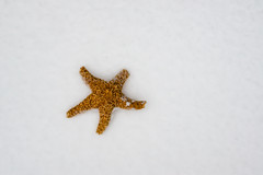 How to Wish for Warmer Weather (AngelBeil) Tags: snow starfish needavacation photo by angel beil