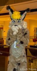 _DSC6000 (Acrufox) Tags: midwest furfest 2017 furry convention december hyatt regency ohare rosemont chicago illinois acrufox fursuit fursuiting mff2017