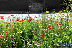 Summer Days (innpictime ζ♠♠ρﭐḉ†ﭐᶬ₹ Ȝ͏۞°ʖ) Tags: melbourn cambridgeshire flowers hedge cemetary pavement road lush summer footpath gates orchardroad colour wildflowers 520835100020176 verge roadside lychgate beetonclose weeds
