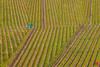 Red jacket guy (Jan Čmárik) Tags: 6dii cmarik canon eos cmrk weinberge wineyard wine red guy jacket outdoor kappelberg bw germany landscape lines mood vw green nature explore