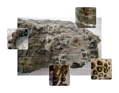 """Fossile 03 • <a style=""""font-size:0.8em;"""" href=""""http://www.flickr.com/photos/71892547@N07/38969855651/"""" target=""""_blank"""">View on Flickr</a>"""