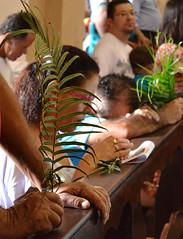 Ramos para abençoar (fotojornalismoespm) Tags: ramos domingoderamos fiéis cristãos oração mãos fé religião igrejacatólica paróquianossasenhoradaboaviagem igrejamatrizdesãobernardodocampo igrekamatriz sãobernardodocampo sãopaulo brasil brazil amandakrainer
