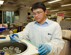 Professor Yin Xiao (QUT Science and Engineering Faculty) Tags: qut ihbi institute health biomedical innovation kelvin grove staff portrait profile professor yin xiao engineering medical physics biochemistry cell biology clinical sciences biotechnology