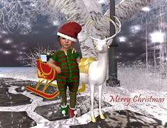 Santa's Helper (Serena Reins) Tags: confession photography secondlife baby christmas holiday sleigh reindeer presents snow trees stars bento toddleedoo cutiebytes cutesy elf mesh shoes festive santa helper white gold merry