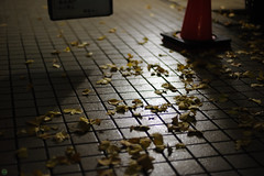 20171130-DS7_3608.jpg (d3_plus) Tags: 秋 50mmf14 building winter thesedays 日常 architecturalstructure 建築物 fall lights nightshot autumn 紅葉 景色 afnikkor50mmf14 クリスマス xmas daily sky dailyphoto autumnfoliage 夜景 japan nikkor50mmf14 streetphoto aiafnikkor50mmf14 50mm nikon ニコン 路上 神奈川 冬 nikkor lighting nikond700 路上写真 nikonaiafnikkor50mmf14 architectural d700 illumination lightdisplay touring scenery kanagawapref street nature 50mmf14s 風景 空 日本 ストリート 50mmf14d イルミネーション nightview