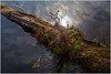 Lake reflections (ronnymariano) Tags: harrimanstatepark nature harrimanpark city landscape unitedstates newyork harriman 2016 us