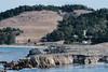 Moss Cove (RPA-Home) Tags: pointlobos seacape