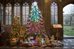 4U5A6412 (bartlett2) Tags: | worcester cathedral christmas trees worcestershire