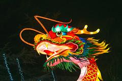 Wild Lights (Strangelove 1981) Tags: 2017 dublinzoo ireland wildlights zoo night lights glow light animals festival dragon