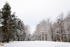 Trees Decorated for Holidays (DTD_9651) (masinka) Tags: trees woods alley frozen cold freezing park nature landscape photography chestnutridge orchardpark ny newyork outdoors etbtsy buffalo southtowns 2017 december winter wonderland beautiful fresh