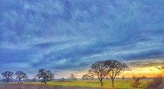 Sunset on route to Snaith 🌞🌞🌞 (explored) (LeanneHall3 :-)) Tags: landscape fields trees sky skyscape clouds green grass sunset sunshine branches blue white countryside samsung galaxys7edge explored explore inexplore