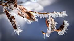 Tenue hivernale (watbled05) Tags: macro glace givre feuilles ciel cristaux bokeh