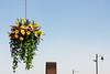 Flowers (Mr Lowand) Tags: flowers urban sky birkenhead railway station