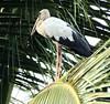 India 2017 148 (megegj)) Tags: gert india vogel bird