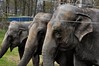 NEDERLAND, THE NETHERLANDS, PAYS-BAS, HOLLAND, HOLANDA, ROTTERDAM, ZUIDERPARK, CIRCUS RENZ, AÑO 2012,03-04-2012, (LATINOS AMERICANOS EN HOLANDA) Tags: nederland thenetherlands paysbas holland holanda rotterdam zuiderpark circusrenz año2012 elelefante eduardogaleano republicaorientaldeluruguay elefantes olifant olifanten elephants éléphants fabula latinosamericanosenholanda rotterdamzuid renzinternational